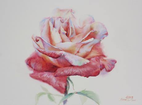 《双色玫瑰》