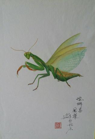《螳螂图忆童年'》